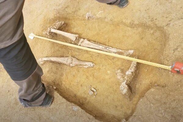 A főblébánia templom felújításához kapcsolódó régészeti munkálatok során szerdán emberi maradványokra és egy harangtöredékre is bukkantak a Dornyay Béla Múzeum régészei. Két koponya és több végtagcsont is előkerült.